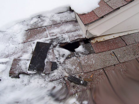 Raccoon Destroys Roof to gain Access, Minneapolis, St. Paul Raccoon removal