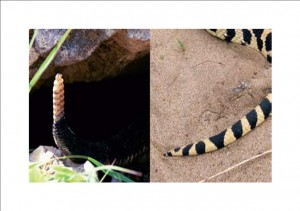 St. Paul MN Snake Removal Services