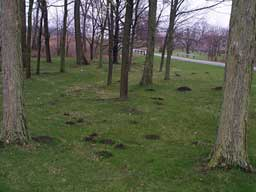 Mole Damage Maple Grove MN