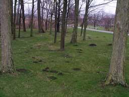 Mole Damage Maple Grove MN