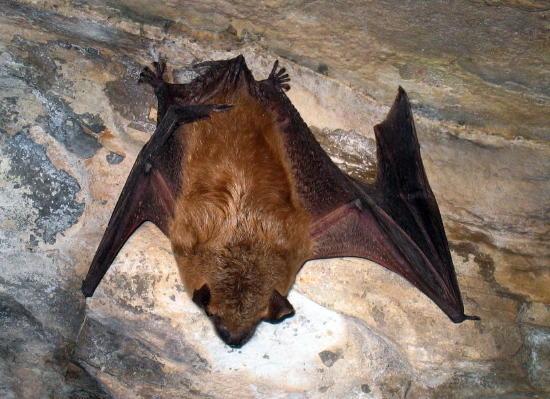 Bat Removal Minneapolis