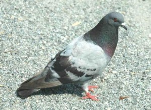 Bird Removal MN