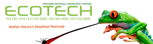Insect removal Services of Twin Cities and Minneapolis St. PAul