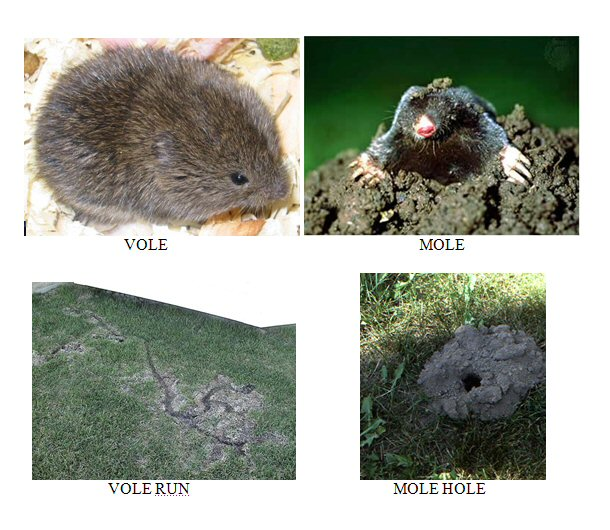 MN Animal Control Minneapolis Remove Moles Voles and Gophers