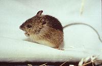 Jumping Mice