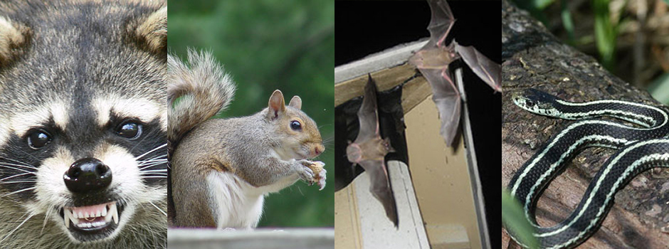 wildlife removal burnsville mn