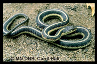 Snake Pest Control Minneapolis