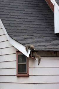Andover Squirrel Removal