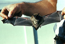 Bat Removal Plymouth MN