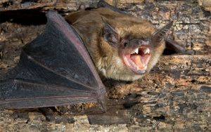 Bats Get Active in Warm Weather