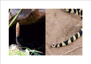Blaine Snake Removal Services