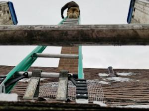 Humane Wild Bird Removal Services