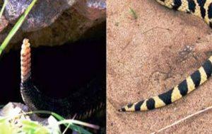 Snake Nest Removal Company