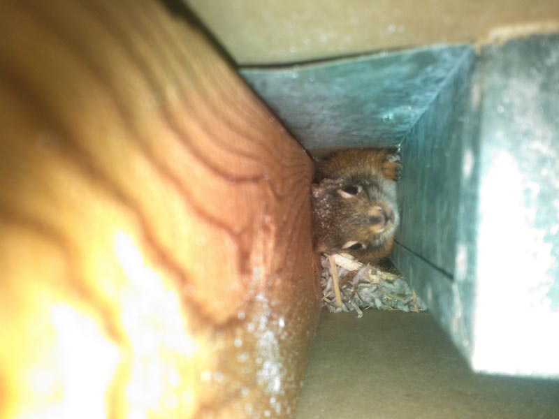 Wildlife Removal MPLS