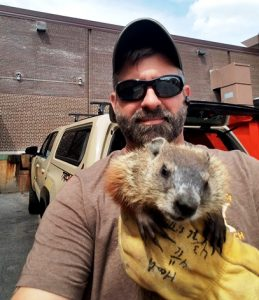 Woodchuck Elimination in Minneapolis