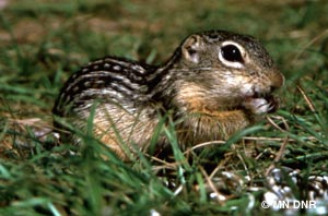 Chipmunk Removal Services in Minnesota