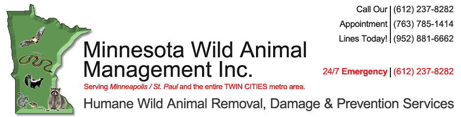 Minnesota Humane Wild Animal Removal | Animal Exterminator MN