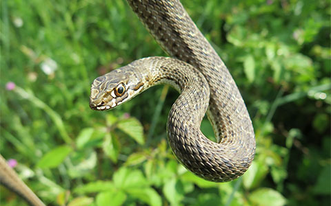 Snake Exterminator Serving Minnesota